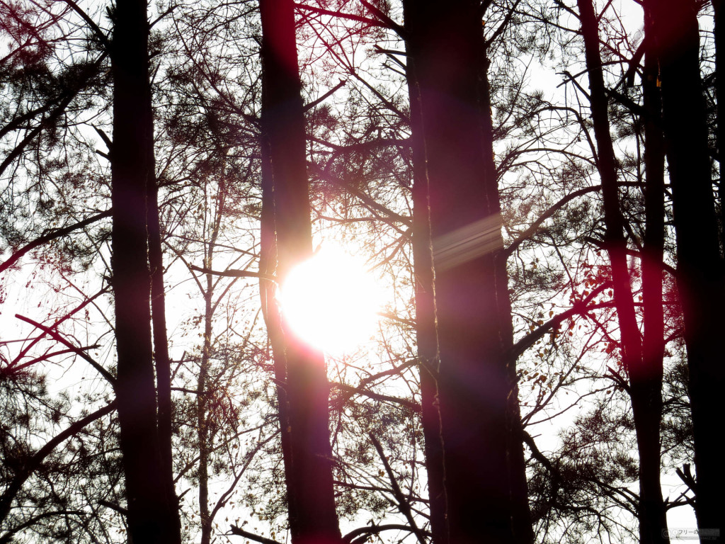 林業の太陽