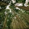 秋田県 横手市の「森林組合森林吸収プロジェクト」
